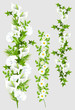 Verschiedene Blumenranken (mit Clippfad)
