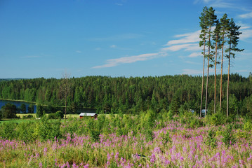 Countryside in Hankasalmi Municipality of Central Finland