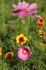 Blumenwiese nahaufnahme