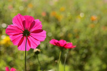 rosa Blüten auf grüner Wiese