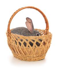 Little rabbit in a basket