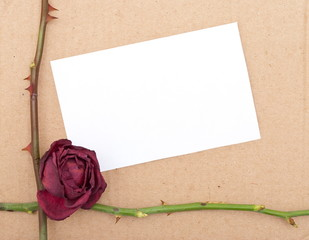 Dry rose with card
