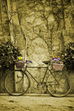 Vintage bicycle with bunches of flowers. Sepia toned