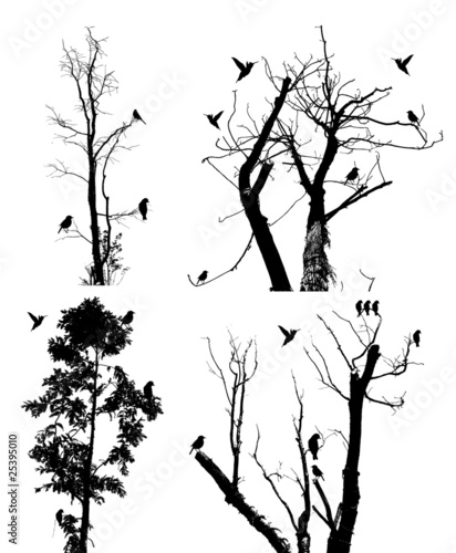 bird and tree吉他谱