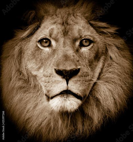 Foto op Canvas Leeuw Lion portrait