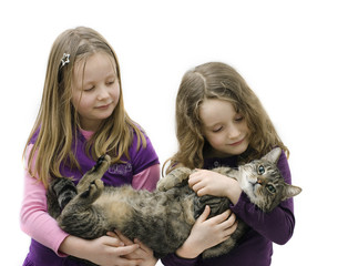 Tabby Cat And Friends
