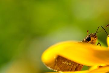 黄色い花と蝶々