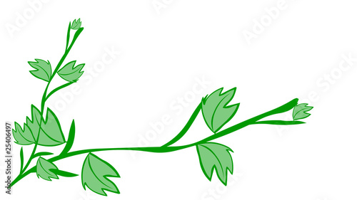 woods foliage isolated. clipping path included.