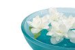 Beautiful Jasmine Flowers Floating in Bowl