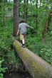 Walking on a fallen tree in a forest