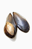 open mussel, close-up