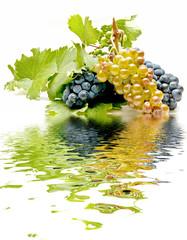 reflejos de uvas