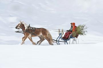 Österreich, Salzburger Land, Paar transportiert Weihnachtsbaum auf Schlitten