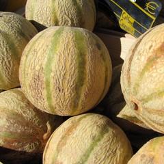 Melons ' brodés '