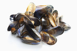 blue mussels, elevated view