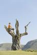 Spanien, Mallorca, Junge sitzen im Baum