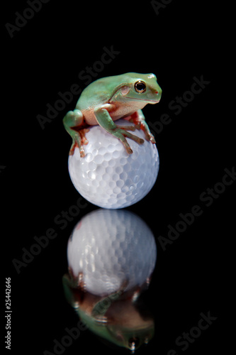 Green Tree Frog Sitting on Golf Ball