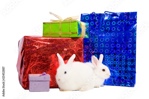 rabbits with gifts