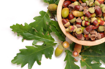 Acorns in a wooden bowl