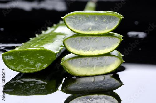 Sliced aloe leaf isolated on black background - 25460649