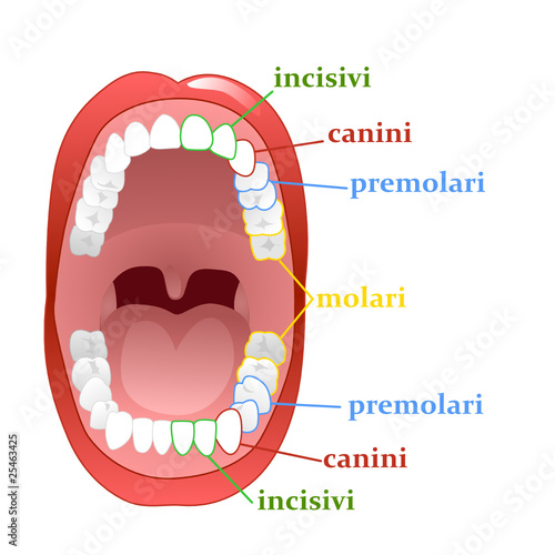 teeth2 vector