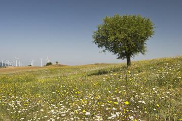 sviluppo eolico