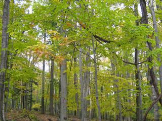 Early Fall Trees