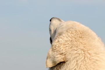 Hund schaut in den Himmel