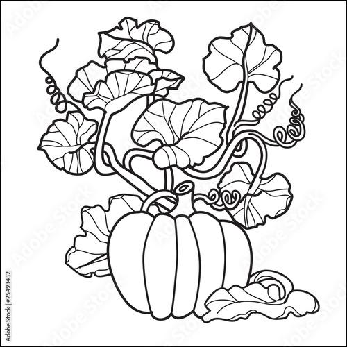 stylish black and white pumpkin