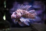 Fototapete Natur - Wildlife - Fische
