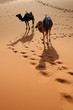 canvas print picture Camels in the Sahara Desert