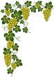 Esquina con uvas doradas