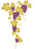 Racimo de uvas violeta y dorado - 25497823