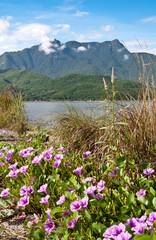 Landscape with pink bindweed flowers