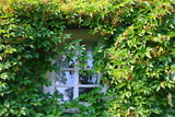 Rural house window twined by wild vine poster