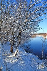 snow-clad wood on coast river