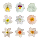 Fototapety White flower collection
