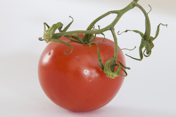 Tomate, Solanum lycopersicum, Solanaceae, Gemüse