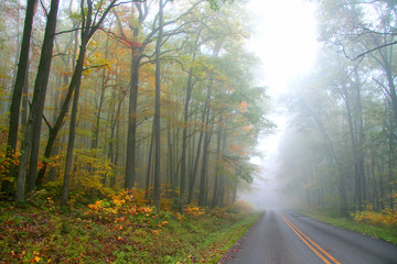 Foggy autumn drive in Allegheny national forest