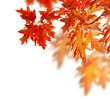 Autumn Leaves Border Design