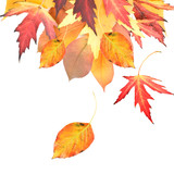 Autumnal Leaves Border
