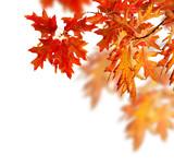 Autumn Leaves Border Design
