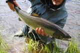Fototapety Baltic Salmon