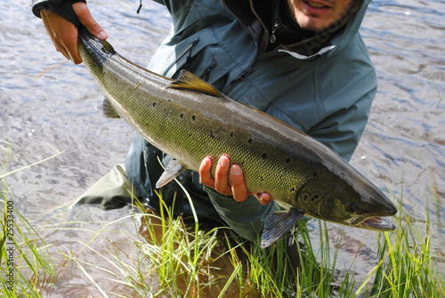 Baltic Salmon