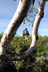 Fisher & Tree