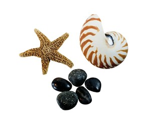 starfish, seashell and stones