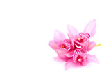 Fototapety orchid isolated