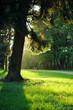 Tree in evening sunlight