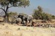 Elefanten und Kudus Etosha Nationalpark