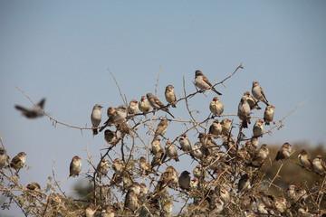Viele Vögel auf Ast